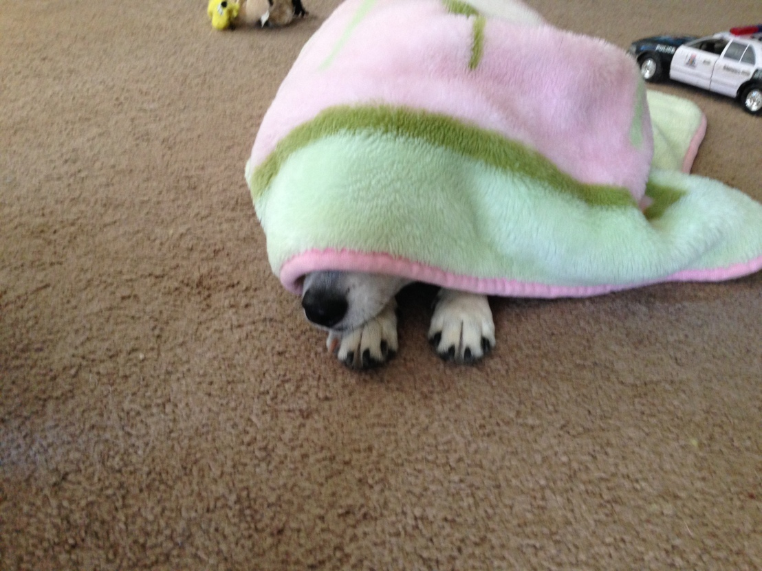 Undercover Pup