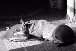 bw ari sleeping on rug
