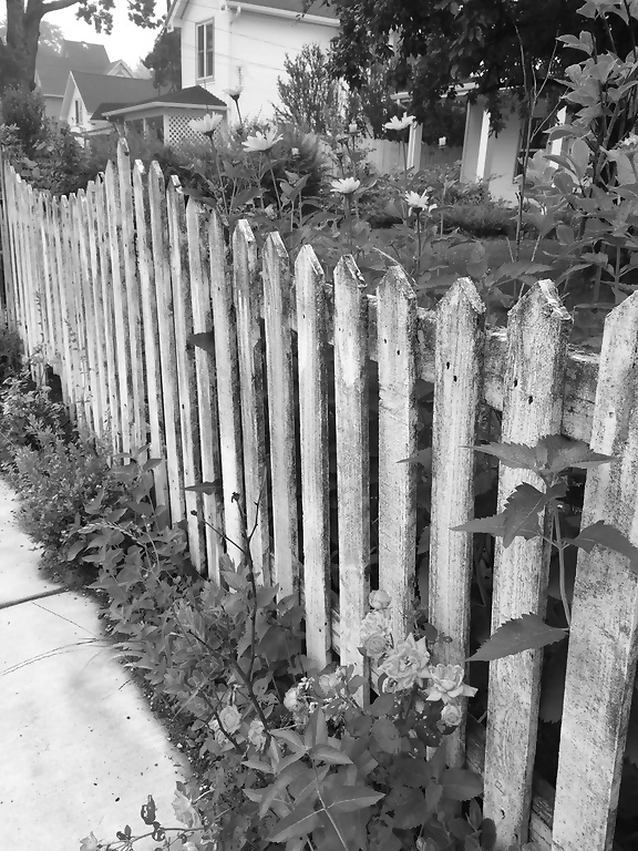 bw fence with flowers
