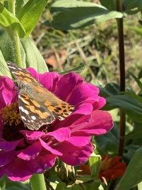 cffc textures flower butterfly
